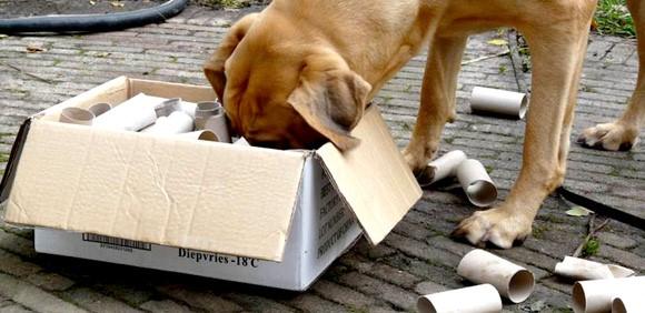 denksport hond 2